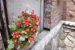estragou a parede de tijolos de concreto e o vaso de flores vermelhas da natureza foto