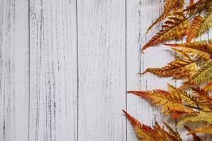 folha de samambaia vermelha folha branca placa de madeira branca modelo de fundo em branco foto