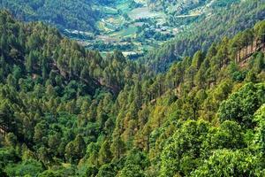 floresta densa de coníferas foto