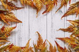 quadro de folhas de outono em madeira branca foto