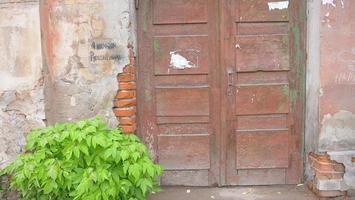 parede de tijolo de concreto quebrado velha porta de madeira planta folha imagem de fundo foto