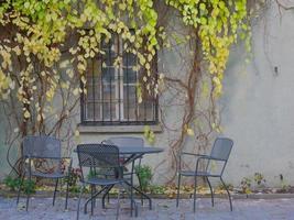 jardim botânico planta folha de videira na cidade velha da letónia foto