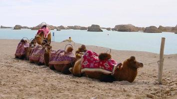 parque geológico dachaidan wusute water yadan e camelo qinghai china foto