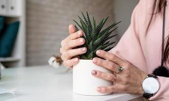 mão feminina com manicure recém-feita segurando uma planta de vaso suculenta foto