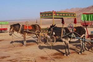 montanha em chamas e camelo em turpan, província de xinjiang, china. foto