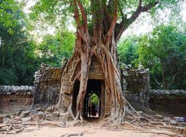 ta som temple, siem reap cambodia. raízes aéreas da árvore da selva do portão da porta foto