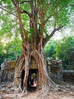 ta som temple, siem reap cambodia. raízes aéreas da árvore da selva da porta da porta. foto