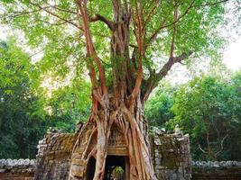ruínas antigas da porta do templo ta som ruína com árvore da selva foto