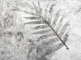textura de folha em piso de concreto foto
