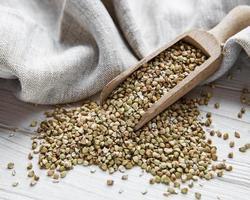 trigo sarraceno verde orgânico foto