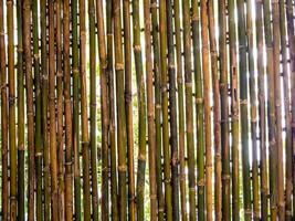 árvores e iluminação por trás do pedaço de bambu foto