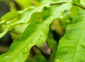 full frame folhas frescas de plantas ornamentais como pano de fundo da natureza foto