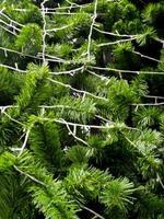 folhagem artificial feita de plástico de árvore de natal artificial foto
