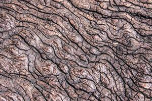 textura de toco de madeira velha foto