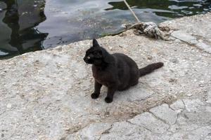 gato preto no cais em Balaklava, Sebastopol foto