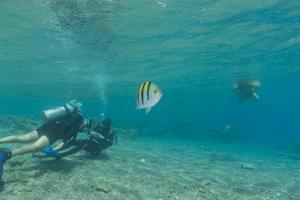 mergulhadores no mar vermelho em eilat, israel foto
