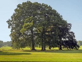 belas árvores maduras em um prado inglês no final do verão foto