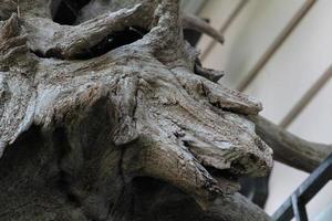 os restos de uma árvore seca podem se parecer com a cabeça de um cavalo foto