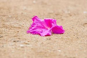 flor de hibisco rosa jogada no chão de terra foto
