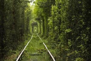 túnel natural do amor formado por árvores na ucrânia, klevan. ferrovia velha foto