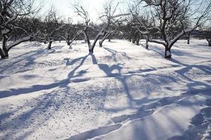 árvores no jardim cobertas de neve foto