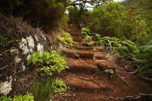 escada velha na densa floresta verde foto