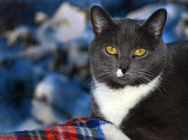 close-up de gato preto com fundo desfocado foto