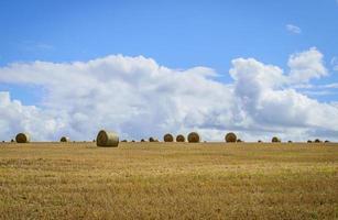 fardos de palha em um campo com céu azul e branco no outono foto