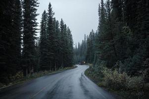 rodovia de asfalto curvada em uma floresta de pinheiros no sombrio parque nacional foto