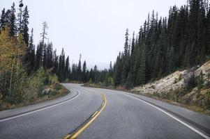 rodovia estrada de asfalto em floresta de pinheiros nublado no parque nacional foto