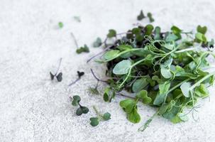 variedade de micro verdes em fundo de concreto foto