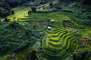 campos de arroz verdes na estação chuvosa de cima para baixo foto