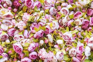 incrível decoração de parede de rosas cor de rosa e brancas, feita à mão, sochi. foto
