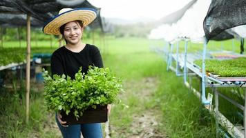 agricultor jovem asiática segura uma caixa de madeira cheia de vegetais de uma horta orgânica. foto