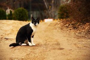 gato preto e branco em estrada de areia rural foto
