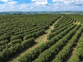 vista aérea de campo de café verde no brasil foto