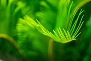 folhas de palmeira como pano de fundo natural foto