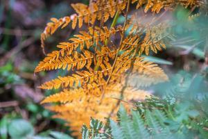 floresta de pinheiros surami com plantas de samambaia foto