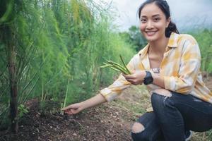 o fazendeiro e os jardineiros estão colhendo espargos vegetais. foto