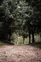 caminho na floresta de pinheiros enevoada foto