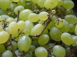 close-up de uva branca foto