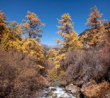 floresta de pinheiros dourados com cachoeira no parque nacional foto
