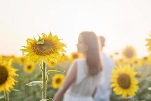 lindo casal caminhando juntos em campos de girassóis ao pôr do sol, fundo desfocado foto