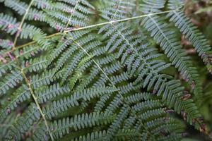 samambaias verdes no campo foto