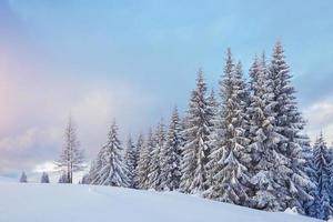 grande foto de inverno nas montanhas dos Cárpatos com pinheiros cobertos de neve. cena colorida ao ar livre, conceito de celebração de feliz ano novo. estilo artístico pós-foto processada