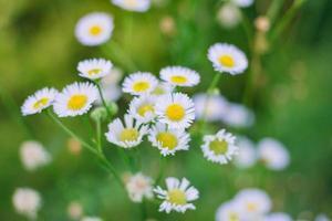 vbelo fundo verde da natureza de flores brancas. imagem para relaxamento e ambiente natural foto