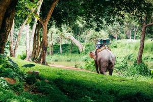 elefante asiático na floresta. pode-se ver em chiang mai, tailândia. foto