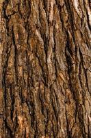 superfície da árvore closeup de fundo de madeira foto
