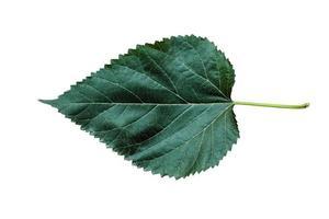 folha verde linda natureza com 3 tipos diferentes de fundo foto