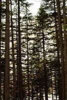 Usho Forest Kalam Swat paisagem paisagem foto
